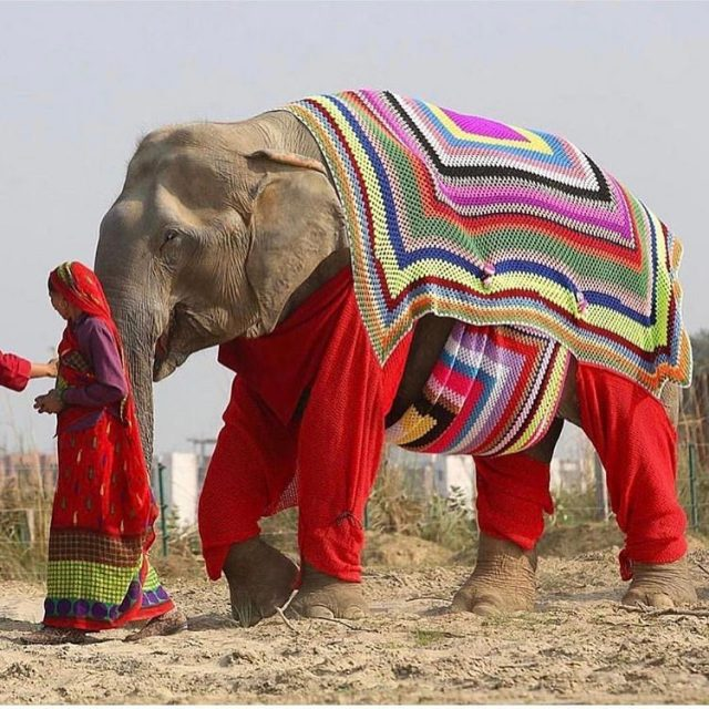 Even elephants are hopping on the Granny Chic fashion train!hellip
