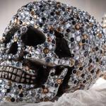 skull cathie steve