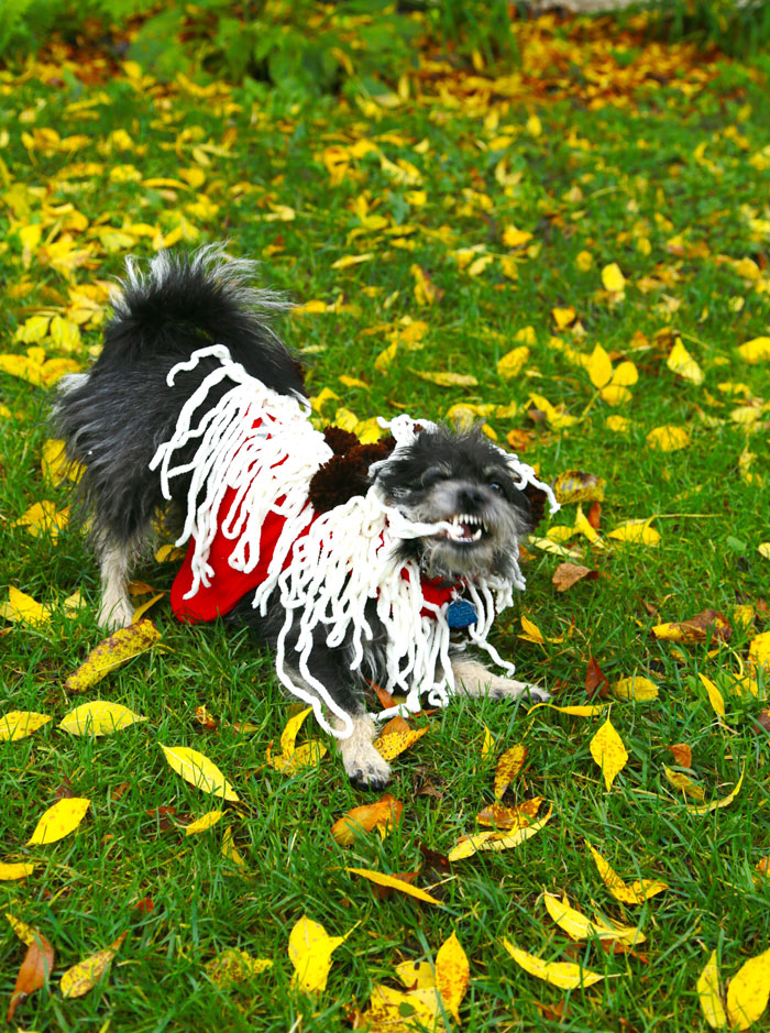 spaghetti-costume-dog-craft-diy