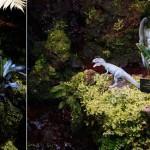 Prehistoric Garden Gnomes
