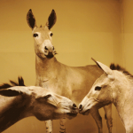 The Donkey Display