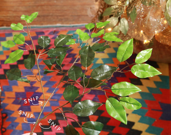 ficus-branches-682