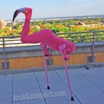 Flamingo of the Day