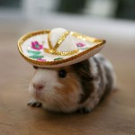 The Not-So-Somber Sombrero