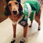 girl-scout-dog