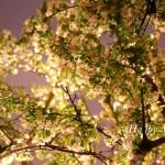 happy-monday-blossoms
