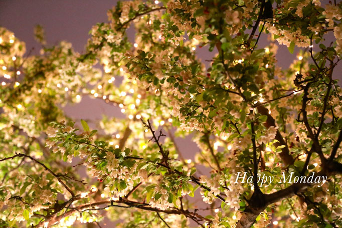happy-monday-blossoms