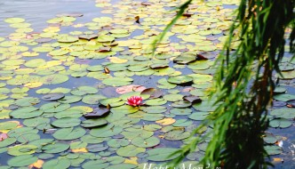 happy-monday-lilly-pads