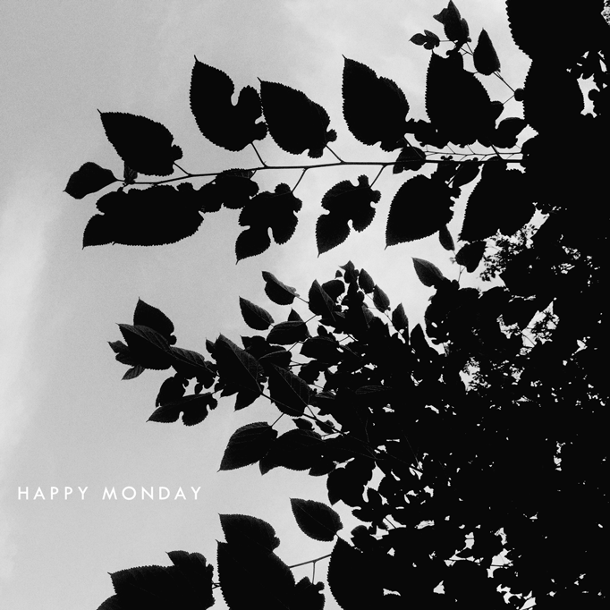 leaves-monday