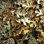 fall-leaves-happy-tuesday-682