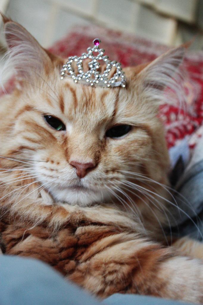 lola-tiara