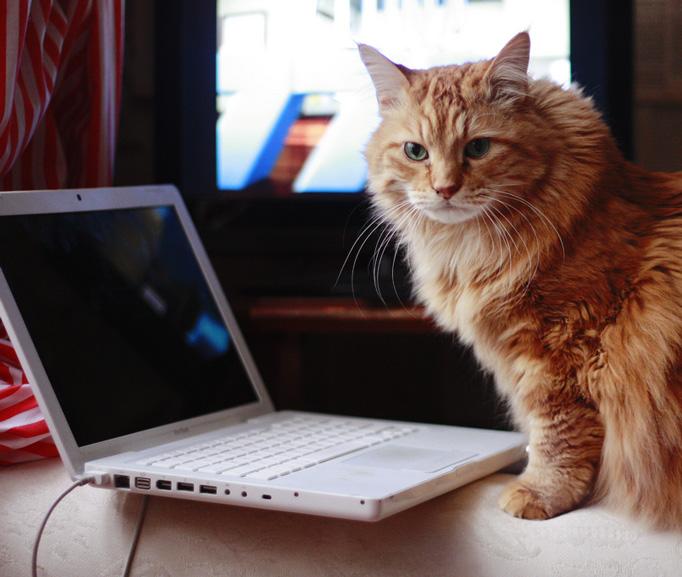 lola-typing